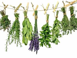 Лекарственные травы в составе Тонзилгона