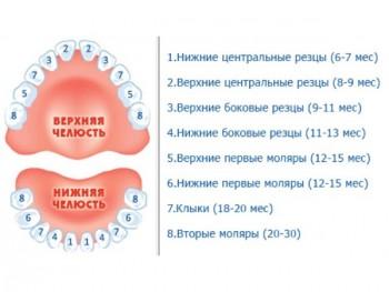 Прорезывание молочных зубов - причина поноса у грудничка