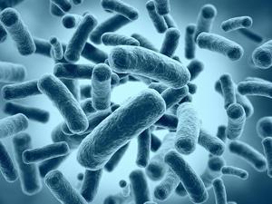Бактерии - возбудители сыпи