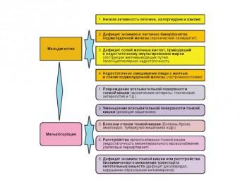 Этиология и патогенез синдрома мальабсорбции