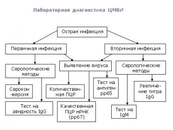 Лабораторная диагностика ЦМВИ