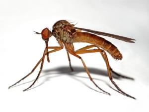 Укус насекомых - причина сыпи у ребенка