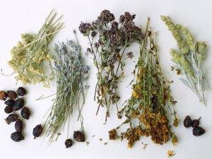 Лекарственные травы в составе препарата