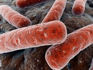 Выявление туберкулезной палочки